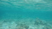 Nedar entre bancs de peixos mola molt!