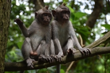 Dos micos al Monkey Forest