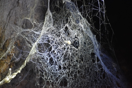 Aranya a la Dark Cave