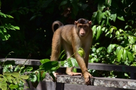 El culpable que trobéssim el primer orangutan