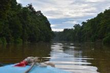 Riu Kinabatangan