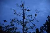 Un grup de micos nassuts
