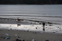 Brutícia a les platges