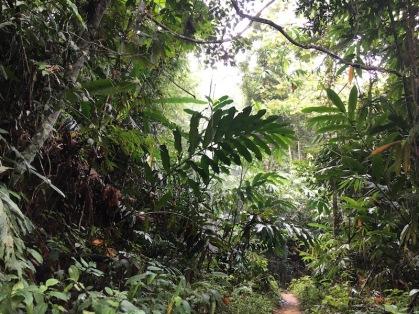 La jungla densa i verda