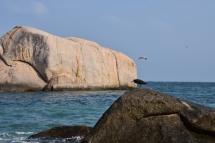 Un home es llença d'una pedra a Tanote Bay