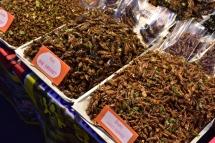 Uns aperitius d'insectes?