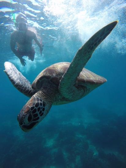 Una gran foto per una gran tortuga