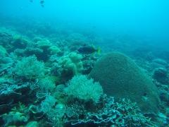 Vistes del fons marí