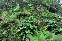 Milers de plantes i flors