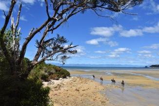 Marea baixa a Abel Tasman