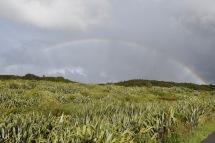 Cape Foulwind ens regala el nostre primer arc de sant martí