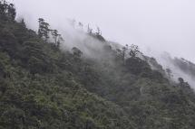 Detall de la boira del matí camí de Cape Foulwind