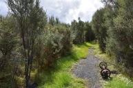 Detall del camí de Charming Creek