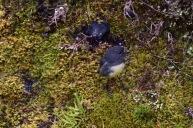 Un ocell força amigable a Detall del camí de Charming Creek