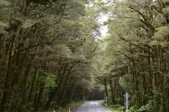 La carretera de Te Anau a Mildford Sound