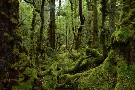 El bosc sembla tret d'un conte, oi?