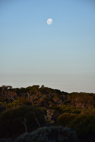 La lluna aCape Schanck Lighthouse