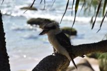 Un ocell reposa sobre una branca