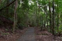 El camí que segueix el riu a Cougal Cascade Park