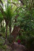 Caminant per la Mount Manaia Walking Track