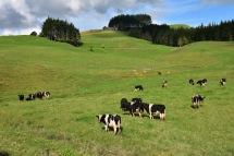 Les vaques les trobes a tot arreu