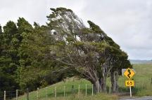 Tots els detalls són bonics a Nova Zelanda
