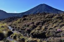 Vistes al Ngauruhoe durant el trekking