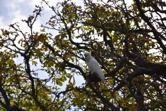 Un altre ocell entre les branques d'un arbre