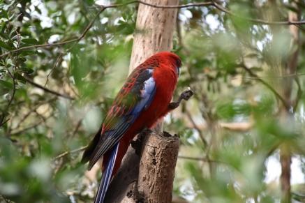 Un ocell a Kennet River