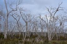 Un bosc mort