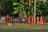 Uns monjos caminant pels camps de Don Det